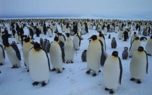 A colony of emperor penguins at the Dawson-Lambton glacier, Antarctica
