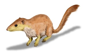 Purgatorius unio, an early therian mammal.