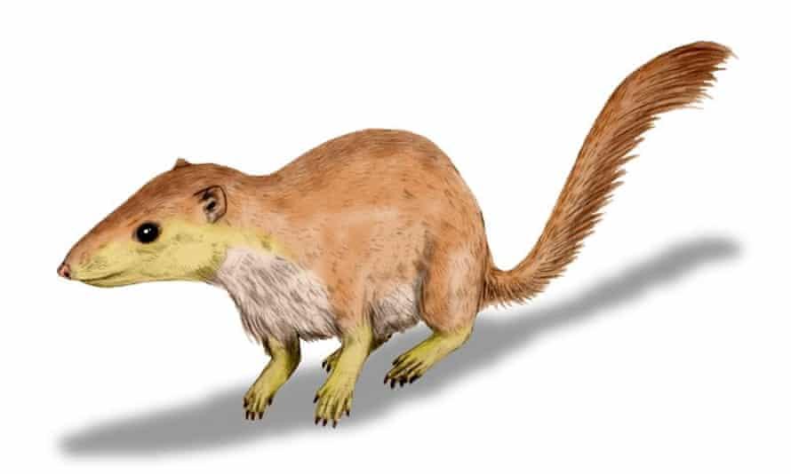 Purgatorius unio, an early therian mammal.