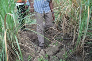 A giant footprint up in the north of the valley shows a last remaining spot where elephants still sometimes come out of the forest to nibble at the edges of the sugar plantation.