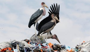Marabou storks stand on a pile of recyclable plastic materials at the Dandora dumping site on the outskirts of Nairobi, Kenya