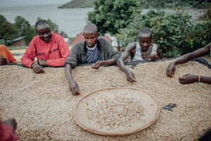 Workers at the CPNCK coffee co-operative sort through fully washed beans for defects