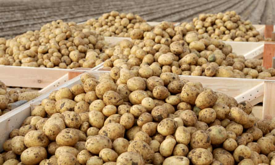 One-fifth of Scottish seed potato exports go to the EU.