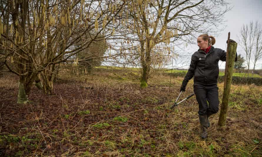 A ranger checks for ash dieback at Sherbourne Park estate in Gloucestershire.