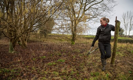 A ranger checks for ash dieback at Sherbourne Park estate in Gloucestershire.