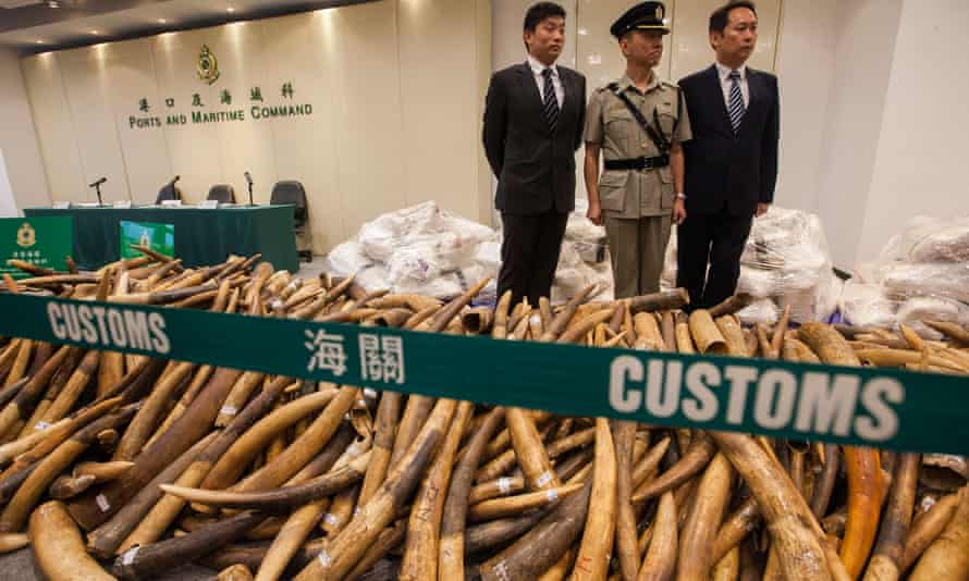 Hong Kong customs from the 'record' amount of ivory hidden in a Malaysian consignment of frozen fish