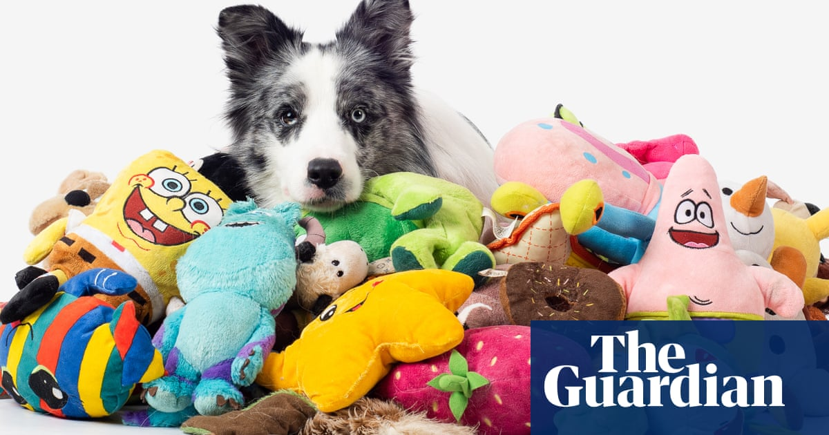 'Genius dogs' can learn names of more than 100 toys, study finds