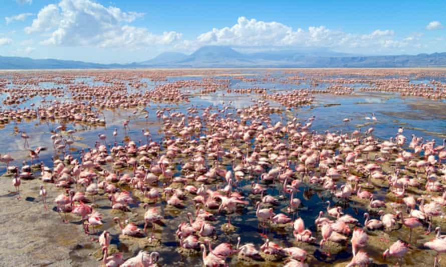 'It's impossible to get to' ... flamingo colony, Lake Natron, Tanzania.