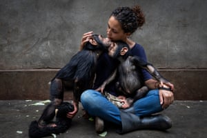chimp being cuddled by woman