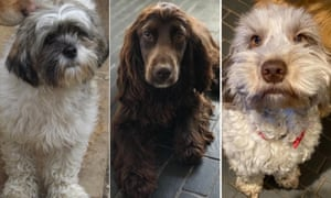 Three of the 17 dogs stolen from Fiveways kennels in Suffolk