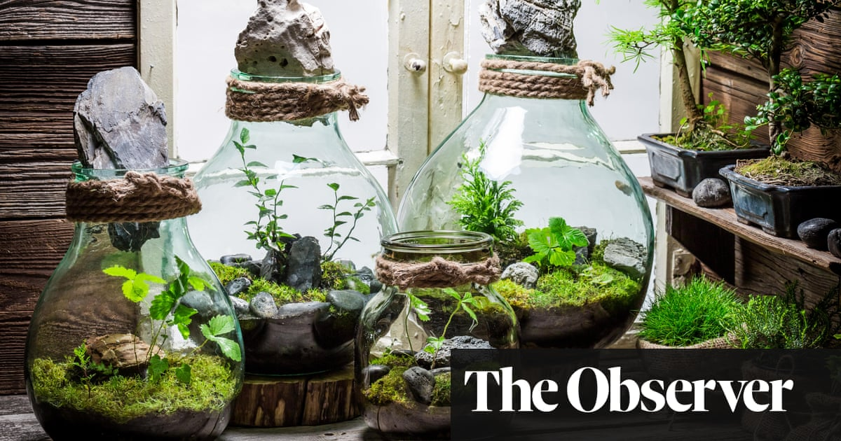 How To Treat Your Terrarium James Wong Life And Style The