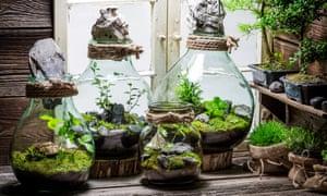 Stunning rainforest in a jar