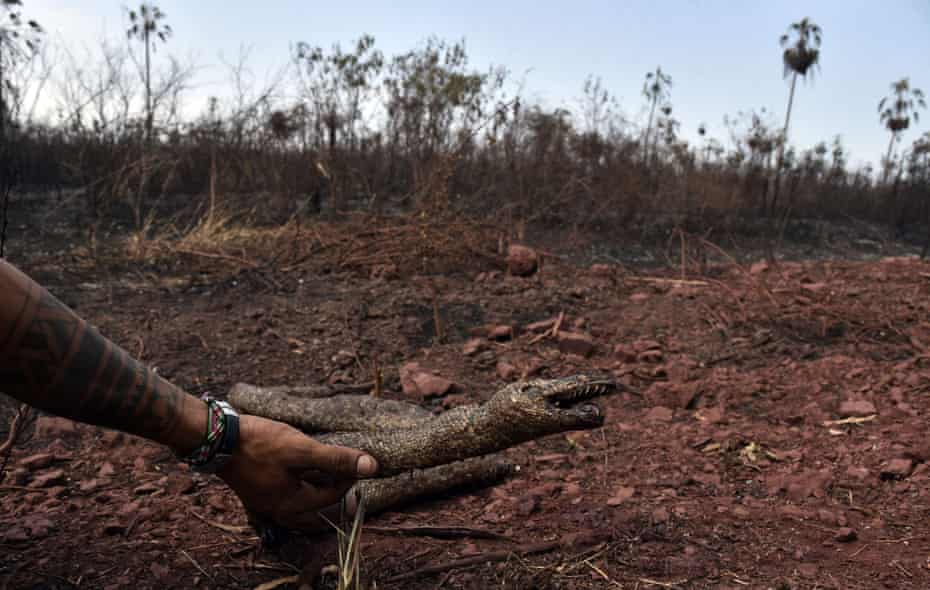 A man holds a dead snake at an area affected by forest fires in Otuquis national park, in the Pantanal ecoregion of south-eastern Bolivia.