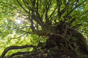 Alloa, Scotland: The climate change tree at Gartmorn Dam, near Alloa, is one of five contenders to be named Scotland's tree of the year.
