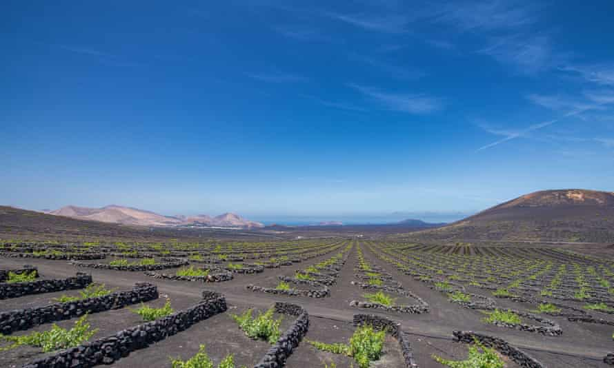 Wine Tours Lanzarote is running virtual tours and tastings of Lanzarote's volcanic wines