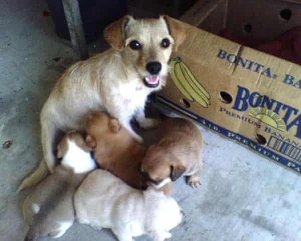 Puppy love ... Manson's rescue dog Veela with her offspring.