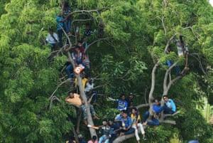 Cricket fans watch the match between Sri Lanka and India from a tree at the Rangiri Dambulla International Cricket Stadium