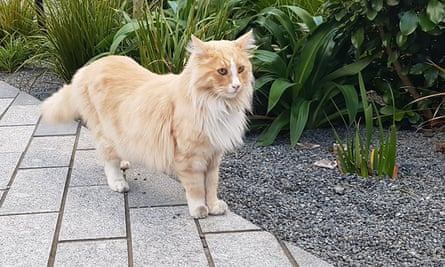 Wellington's world famous cat, Mittens, who has been nominated for New Zealander of the Year