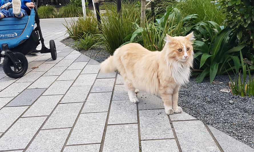 Wellington's famous cat, Mittens