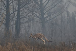 A kangaroo races to get away from the fire front at the North Black Range, near Braidwood, on 1 December