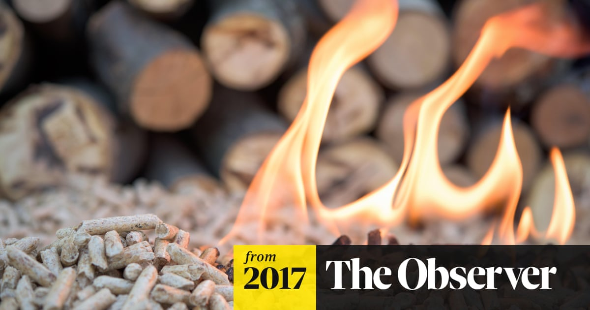 Burning wood for power is 'misguided' say climate experts