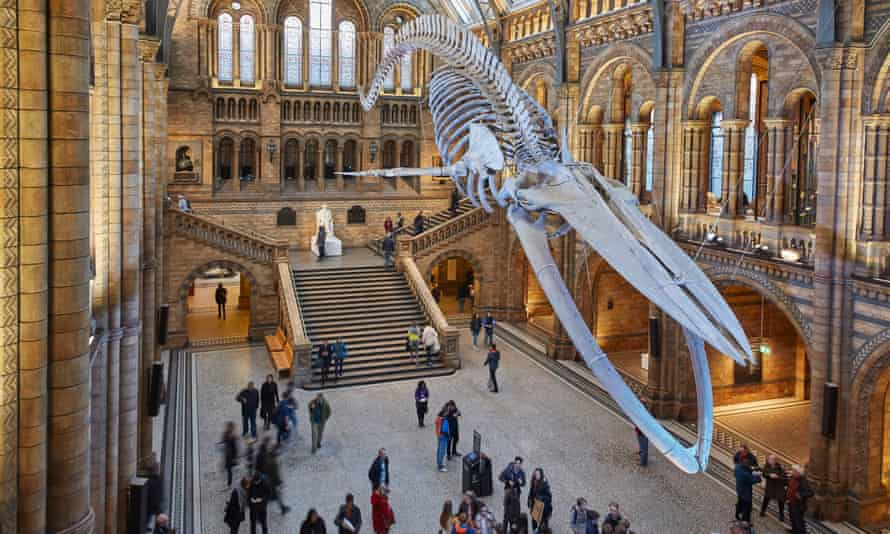 Natural History Museum's 'Dawnosaurs' sessions for children with autism has been applauded.