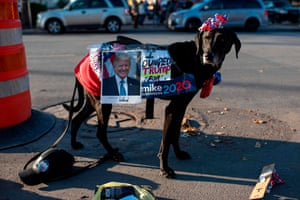 Dog draped with posters