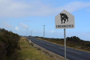 A sign warning drivers to be careful of Tasmanian devils on Arthur River Road.