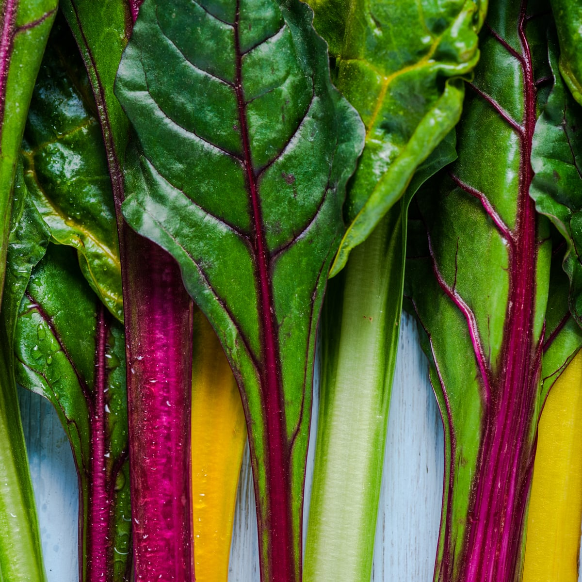 It S Not Too Late To Plant Swiss Chard Gardening Advice The Guardian