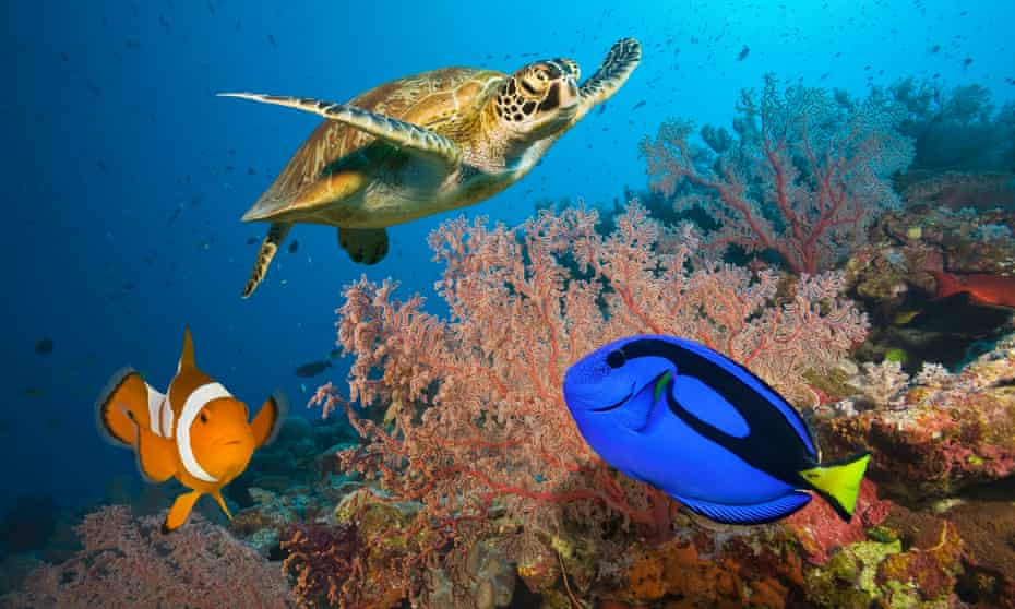 Clownfish, blue tang and sea turtle on the Great Barrier Reef, Australia