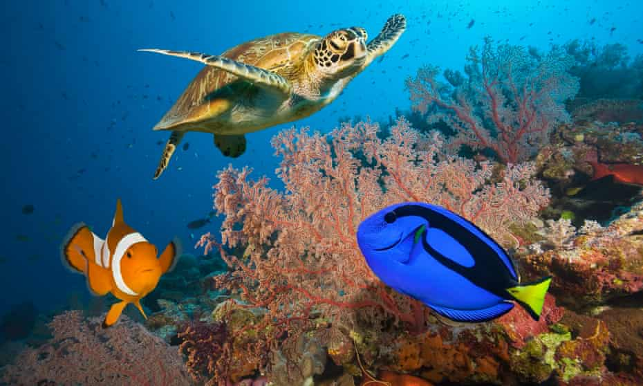 A sea turtle with a clownfish and a blue tang and on coral reef in the Great Barrier Reef.