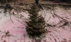 A small conifer tree sits in dry, sandy-looking ground.