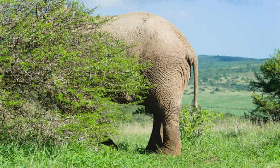an elephant hidden behind trees