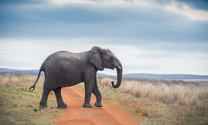 Elephant crossing dirt road with blue sky background