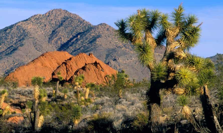 Gold Butte National Monument outside Las Vegas would protect a scenic and ecologically fragile area near where rancher Cliven Bundy led an armed standoff against government agents in 2014.