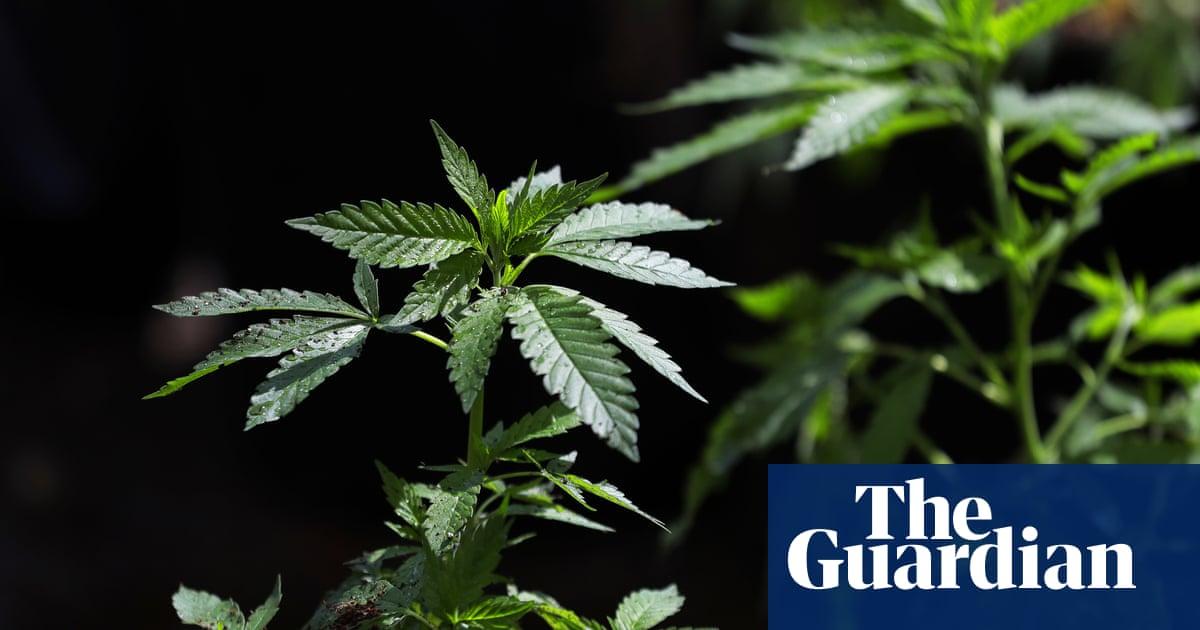 cannabis dating uk
