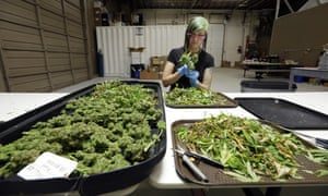 When it comes to marijuana legalization, an activist says, success in one state begets success elsewhere.