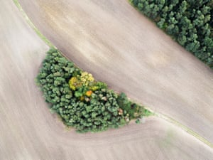 "Stephan Fürnrohr is the winner of the special category Ährensache for his image ""Green Island"", an aerial photograph of a copse of trees in a field"