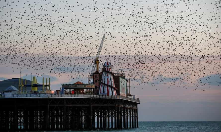 The item is believed to have been found west of Brighton's Palace pier.