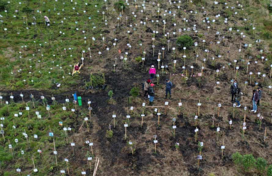 Families of Covid-19 victims spreading their relatives' ashes in holes where they will plant trees as a tribute to their loved ones