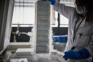 A lab technician at work in the LN2 (liquid nitrogen) room where all of the white blood cells taken from clinical trial samples are stored at -150C, for potential future testing.