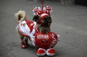 A dog called Perlita supports Peru