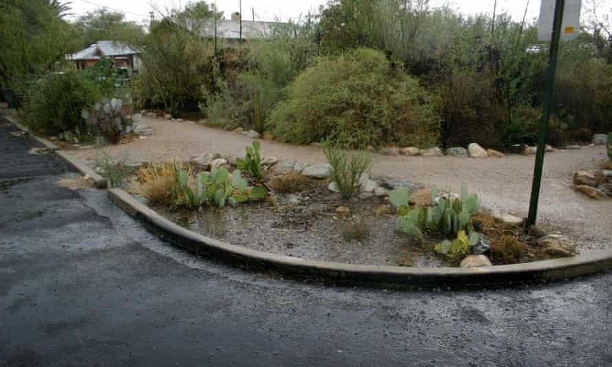 Cuts to the curb in the street outside Brad Lancaster's home in Tucson, Arizona, direct street water runoff to a plant basin.