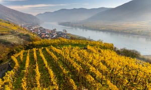 'Wines for when there is a whisper of wintry cool in the air': Austrian vineyards overlooking the Danube river.