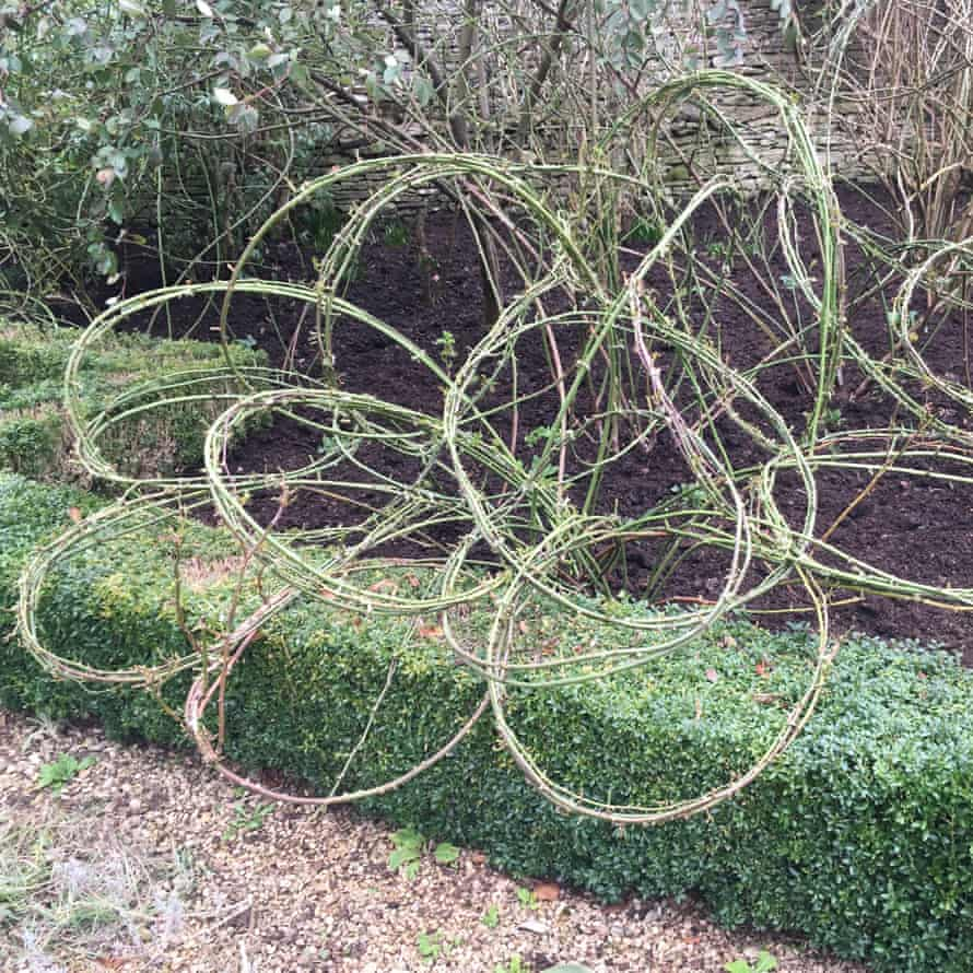 photo of hedge and tree sculpture