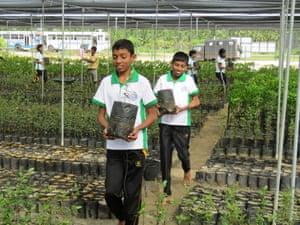 Sri Lankan children help replant mangroves