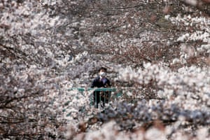 Surrounded by cherry blossoms in Tokyo