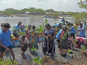 Members of the Sri Lankan navy join local women to replant mangroves.