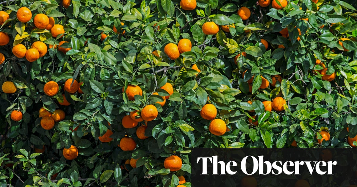 Orange Tree Leaves For A Taste Of The Tropics Life And