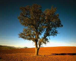 Palacios is hoping the EU will recognise Spain's olive trees as a living history.